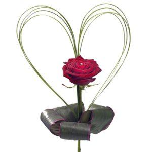 En enkel röd ros, med strimlor av grönt format som ett hjärta runt själva blomman.