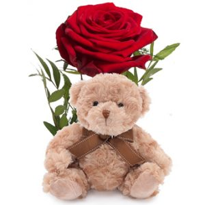 En enkel röd ros tillsammans med en söt liten nalle.