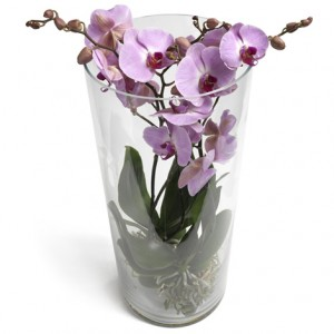 Orkidéplantering (ljuslila orkidé) i glasvas.
