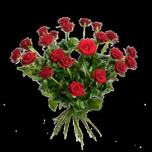 En stor bukett med 24 stycken vackra, röda rosor.