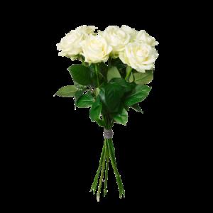 Stilig bukett med enbart vita rosor.