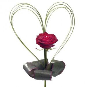 En röd ros med fina strimlor av de gröna bladen formade som ett hjärta runt själva rosen.