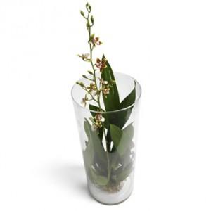 En hög cylinderglasvas med plantering av Oncidiumorkidéer i brandgula toner. Små blommor.