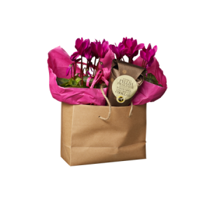 Presentpåse med lila cyklamen tillsammans med en strut chokladpraliner.