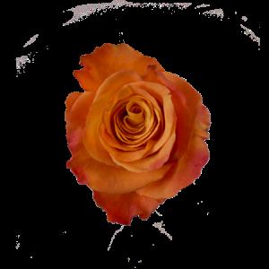 Orange ros - välj själv antal till din bukett Finns hos Interflora.