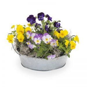Zinkskål med penséer i gult och lila. Från Euroflorist.
