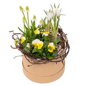 Vårgrupp i rund hattask. Vita pärlhyacinter, vita krokus och vit/gula penséer. Superfin! Blommorna finns hos Euroflorist.