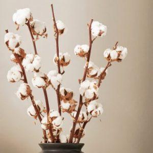 Bomullskvistar, mycket dekorativa. Köp online hos Florister i Sverige!