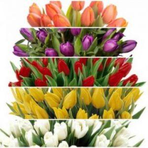 Mixa din egen tulpanbukett! Ett alternativ hos Florister i Sverige